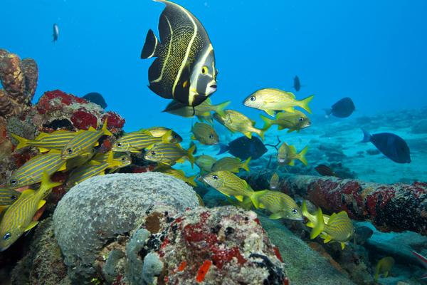bn-reef-diving-2