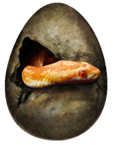 snake_egg_by_kaileighblue