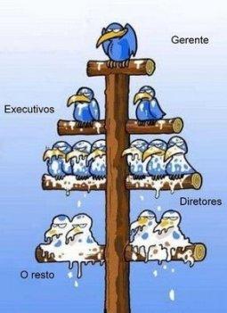hierarquia_da_empresa_sakarolha